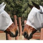 Professionals Choice Equisential Fly Mask EQFM With or Without Ears